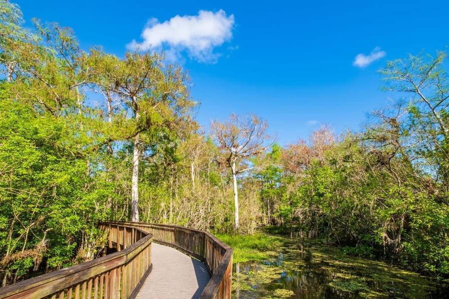 Wanderweg im Big Cypress National Preserve Florida