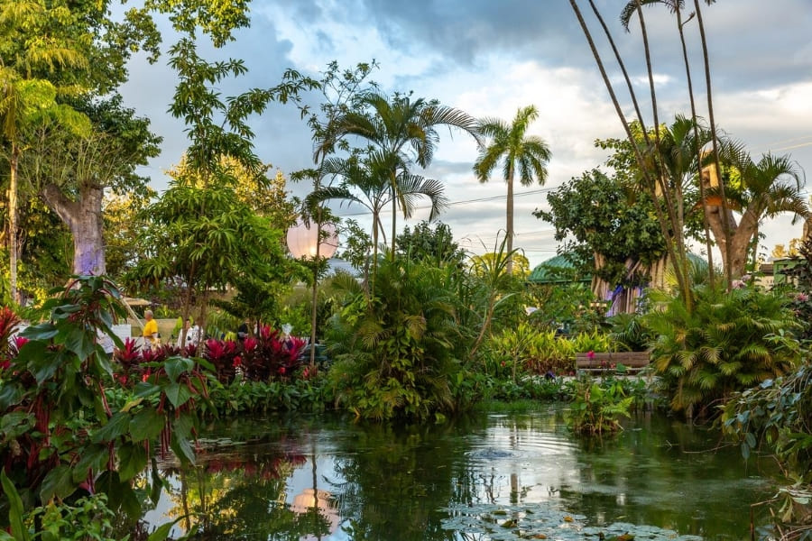 Pflanzen und Bäume vom Everglades Wonder Gardens in Florida