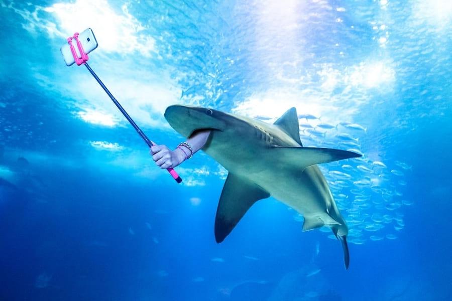 Hai im Wasser von Florida